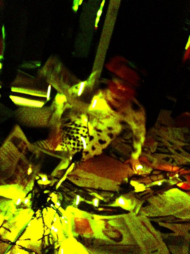Cacaoke Night 2014_LoFi_Milano (27)